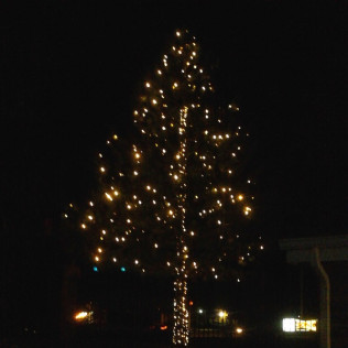 Colorado Springs Christmas 2019.Bright Lights By Wright Wright Tree Lawn Landscape Care